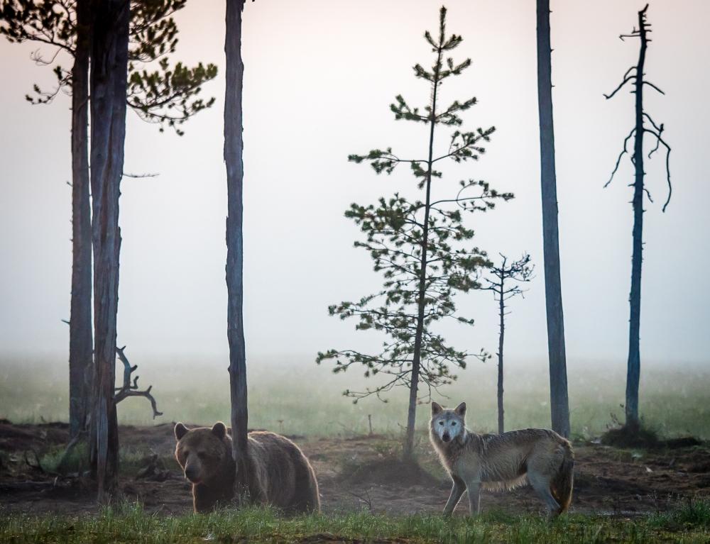07032241a107c0 Więcej dzikich zwierząt w dzikiej północy Europy. Rozmowa z Aino ...